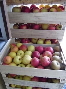 Colis pommes
